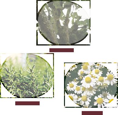 アロマティックハーブの 香りの癒し効果